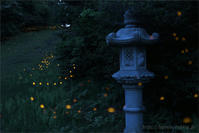 ヒメボタルと石灯篭 - 遥かなる月光の旅