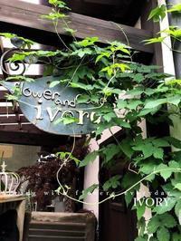 ホップ -  Flower and cafe 花空間 ivory (アイボリー)