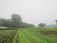 小暑 - 南阿蘇 手づくり農園 菜の風