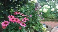 暑い庭で咲く花たち - 今から・花