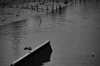 荒川アンダーザブリッジ - HTY photography club