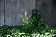 オーシャンブルー - hanako photograph