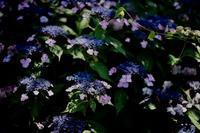 "night blooming... - 飽商909の""ナローな""時計部屋"