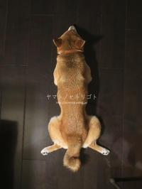 """""""体が硬い人のための柔軟講座"""" - yamatoのひとりごと"""