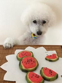 スイカのクッキーtoだいずとくろちゃんのビフォーアフター♡ - パンのちケーキ時々わんこ