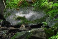 岩風呂 ヤブサメ - 鳥さんと遊ぼう