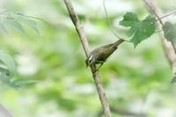 河口湖 - Bird Healing
