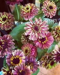 """""""ジニア"""" -  Flower and cafe 花空間 ivory (アイボリー)"""