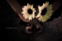 --- 7月14日 --- - Rphotography