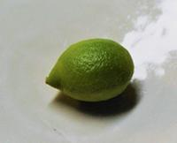 レモン - ぎんネコ☆はうす