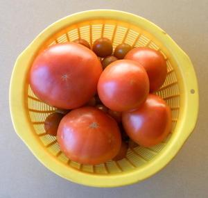 「家庭菜園」収穫そのⅢ - 歩人庵の住まい徒然