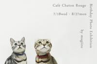 Cafe Chaton Rouge Birthday Photo Exhibition by mugiiro - カフェ・シャトンルージュ blog
