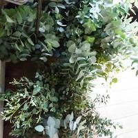 ユーカリでクールダウン - みどりのある暮らし  【植物を取り入れてENJOY・EASY・ECOLOGYな3Eライフ☆】