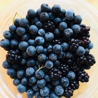 ワイルドブルーベリーとブラックベリー狩り - 玄米菜食 in ニュージャージー