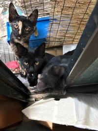 お願い - 八幡地域猫を考える会