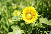 夏! - *keep smiling*