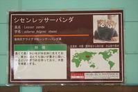 もふてく☆ゴールデンパン祭り2018みさき公園編・その3 - レッサーパンダ☆もふてく放浪記
