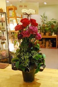 周年御祝、開店御祝、退院御祝など。お祝いのお手伝いのお花 - 花と暮らす店 木花 Mocca