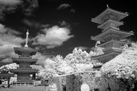 泉南市 長慶寺 - てっつぁんの「出会いがしらの四季風景」