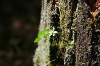 コケの森にて-3 - 自然と仲良くなれたらいいな2