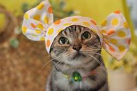 キャンディになってみたにゃ! - 愛しき猫にゃん♪
