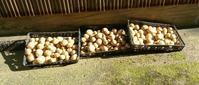 20180715 【家庭菜園】ジャガイモ - 杉本敏宏のつれづれなるままに