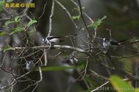 山で出会った鳥たち+α - 奥武蔵の自然