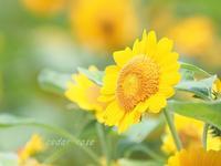 真夏の花 - 瞳の記憶