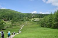 入笠山のスズラン (良)6月8日撮影 - 野山の花たち
