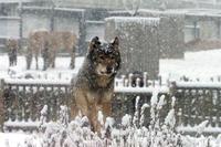 雪景色の中の動物たち - 動物園放浪記