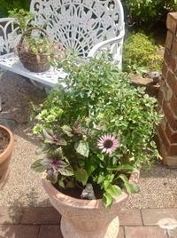 暑さ寒さにサバイバルする植物の寄せ植え - 英国紅茶とローズ &ハーブの小さなおもてなしサロン ~ligare flora~