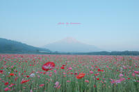 花の都公園 - Photographie de la couleur