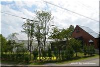 国蝶「オオムラサキ」 - 北海道photo一撮り旅