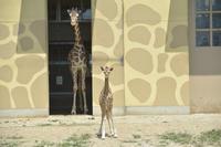 ルリカ - 動物園へ行こう
