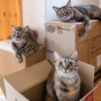 箱に乗るのが好き - 猫と夕焼け