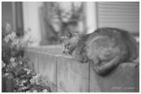 眠り猫 - BobのCamera
