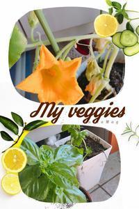 私の育ててる植物達 - 妄想旅