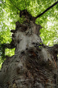大樹の森を夢想する - memory