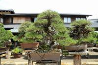 あれを撮れ、次はこれを撮れと指図する江戸川区の盆栽美術館 - 旅プラスの日記