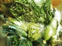 【ジーバナ農園☆夏野菜祭りセット】 - ジーバナ農園