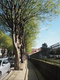 ポルト散歩(27)Guimaraes ポルトガル発祥の地へ - よく飲むオバチャン☆本日のメニュー