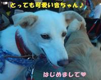 譲渡会のご報告!(その2) - もももの部屋(家族を待っている保護犬たちと我家の愛犬のブログです)