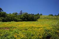 キンコウカ - オバサンが行く ヒマラヤの青いけしの旅/改め   時々蔵王の花たち
