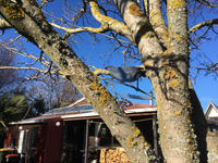 ガーデンアートその2 - bluecheese in Hakuba & NZ:白馬とNZでの暮らし