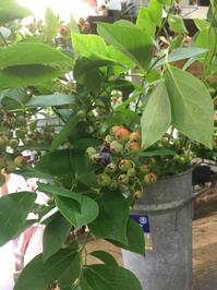 花のある暮らし【ブルーベリーの枝】を飾る - ルーシュの花仕事