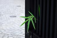 石畳の街 - 花の仕事と。。日々の暮らし。。