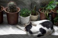 最近の猫事情55 - 鳥会えず猫生活