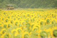 夏の楽しい景色 - PTT+.