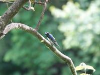 青い鳥。 - ヒロムシ君のお散歩日記