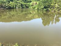 灼熱の野池釣行 - WaterLettuceのブログ